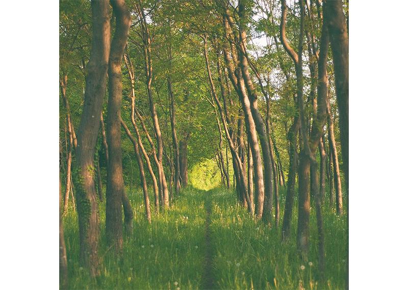 Healing: A Balanced Path